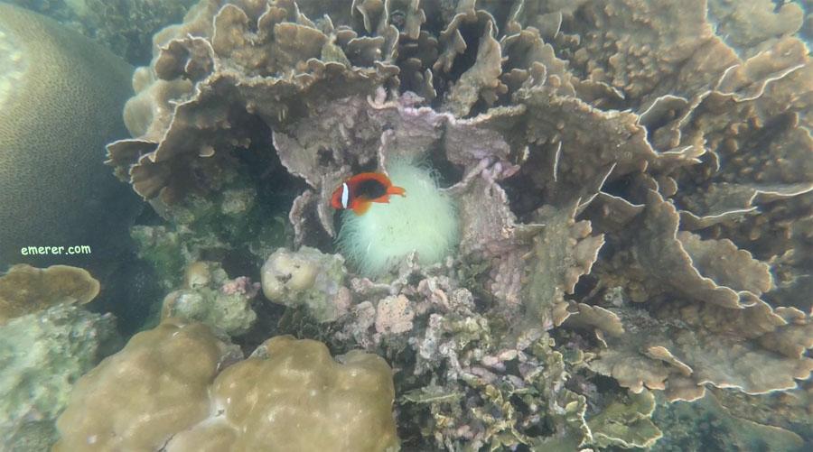 snorkeling-pulau-abang-batam-5b